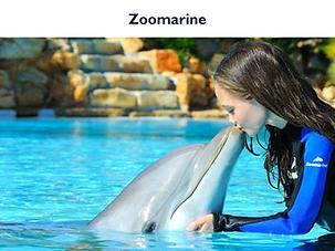 Zoomarine.png