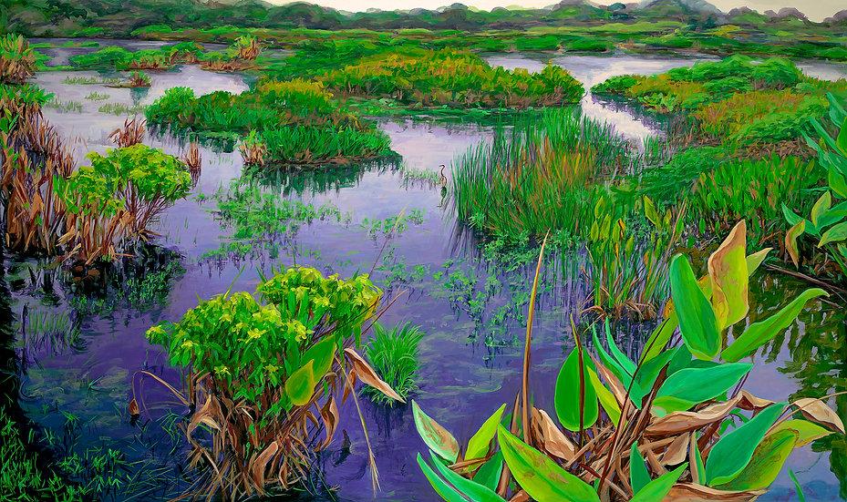 Everglades IV