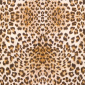 Cheetah - Thermoflex Fashion Pattern