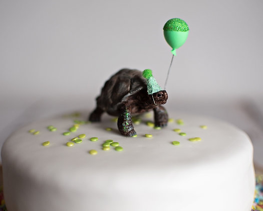 Tanya Tortoise