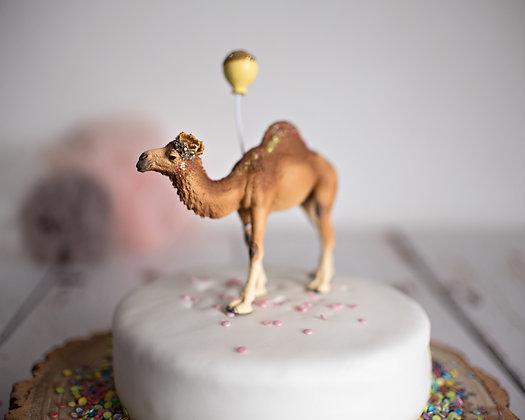 Carter Camel