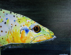 Trout Rising 2#