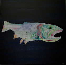 Trout in the deep pool
