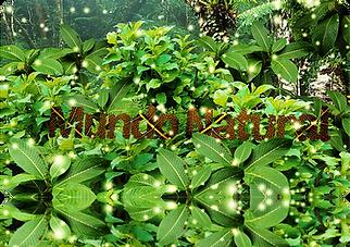 MUNDO NATURAL .png
