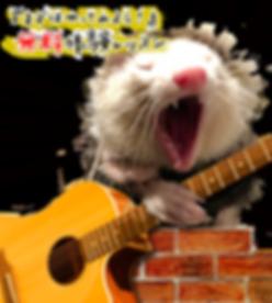 梶が谷、溝の口の音楽教室でギター、ピアノ、ベース、ドラム、ボーカルの無料体験レッスン