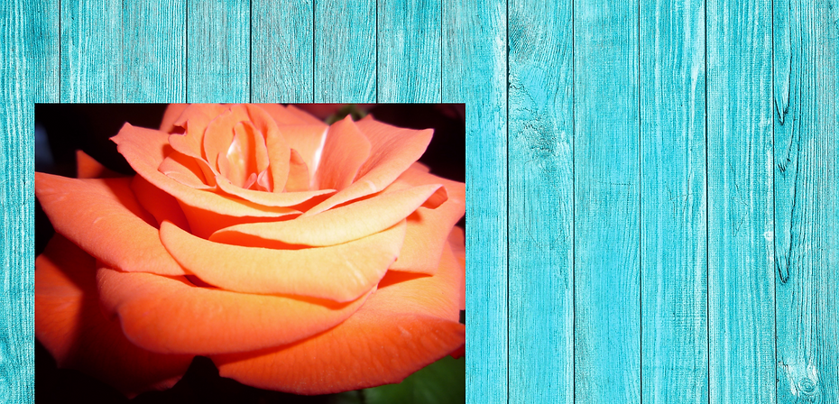 Blue boards with rose.png
