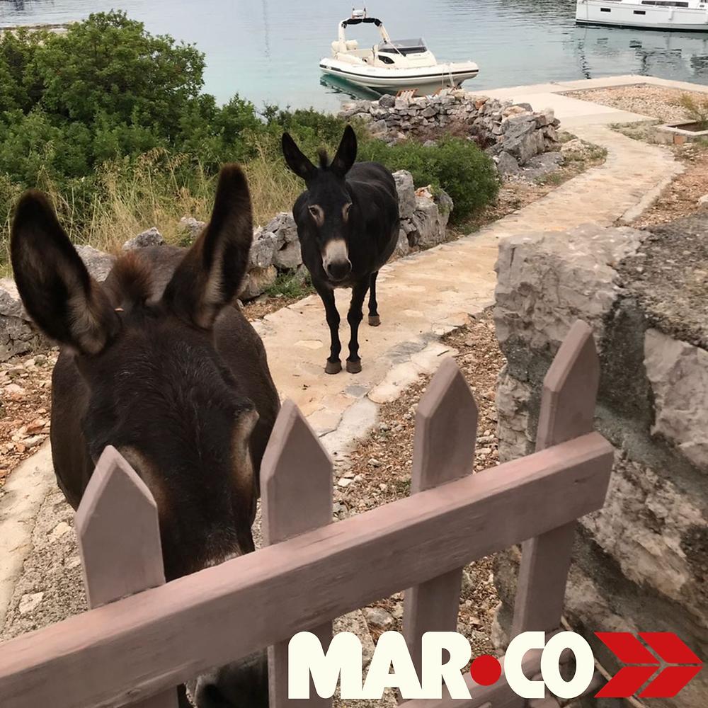 boat donkeys