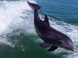 Flipper lives!!!!!