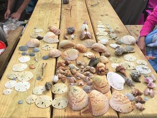 Sea Shells!!