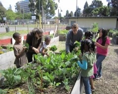 Support Christchurch School Community Garden