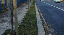 Blackwall Lane has new street trees!