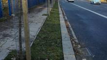 Blackwall Lane has new street trees!