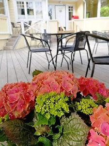 hortensiat terdellä.jpg