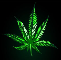 green-cannabis-leaf-on-black-background-