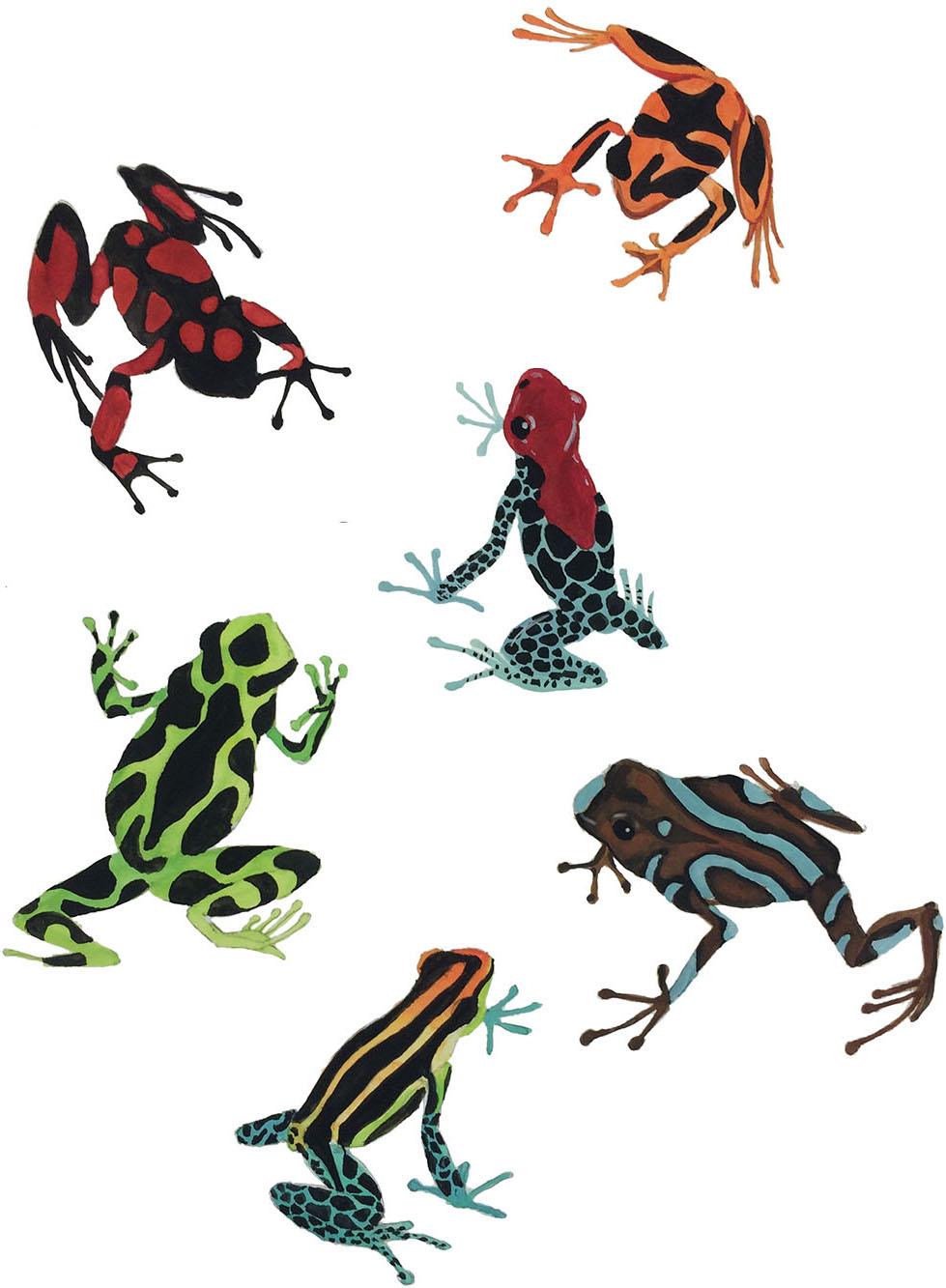 Poison dartfrogs