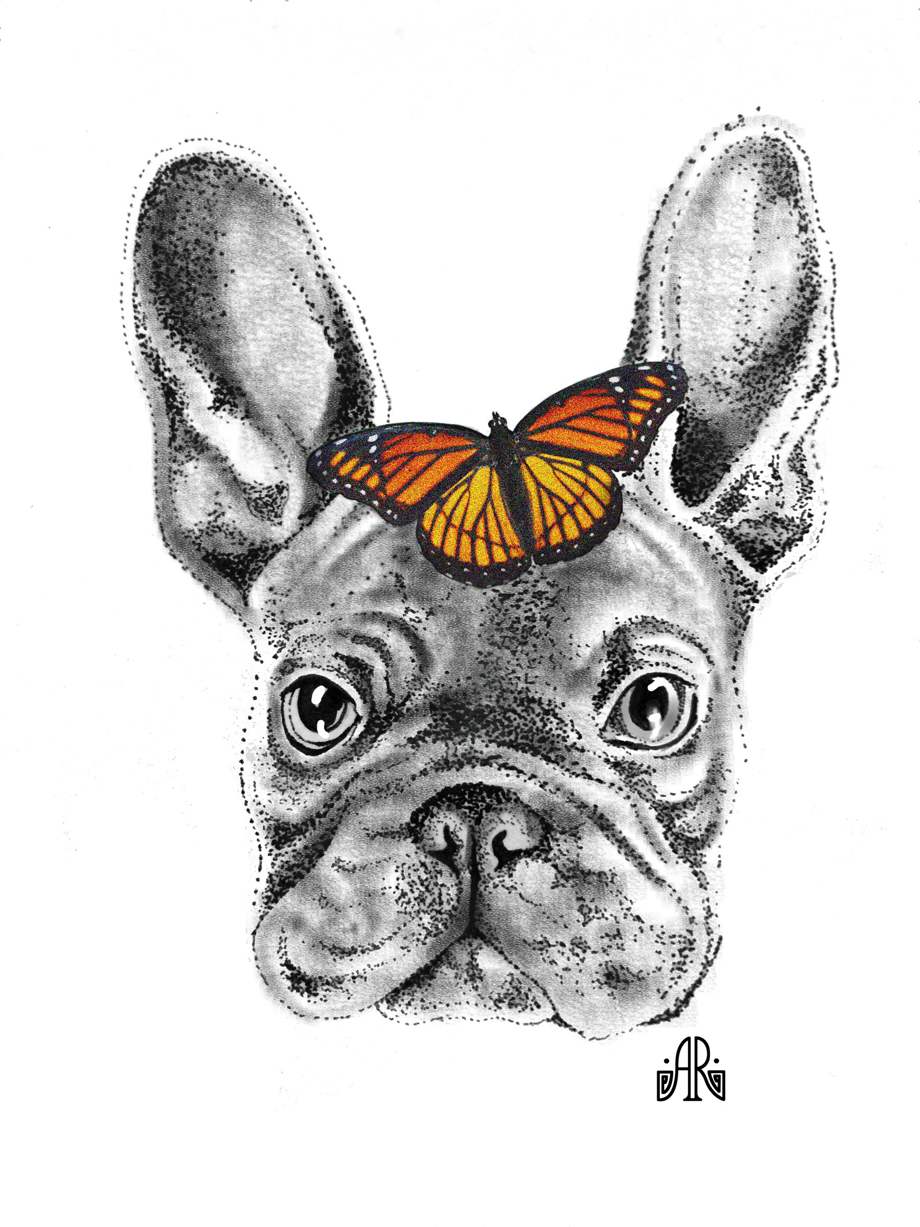 Frenchie Monarch