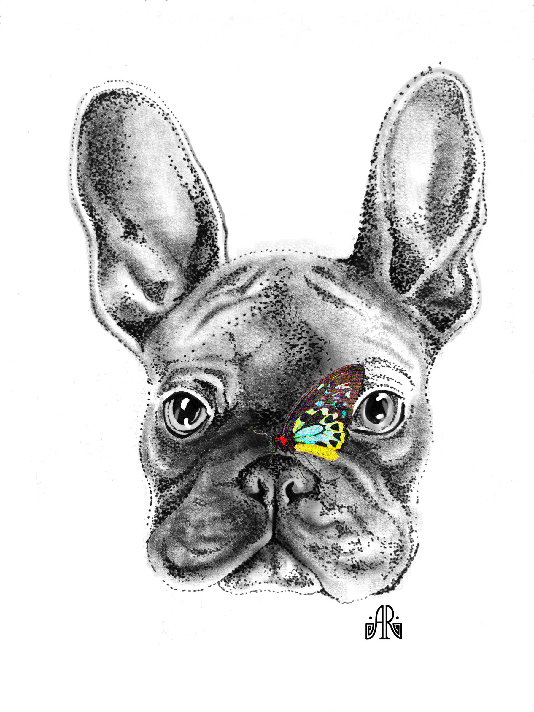 Frenchie Butterfly Nose