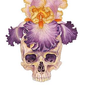Iris Skull