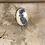 Thumbnail: Fafnir Ring Oval