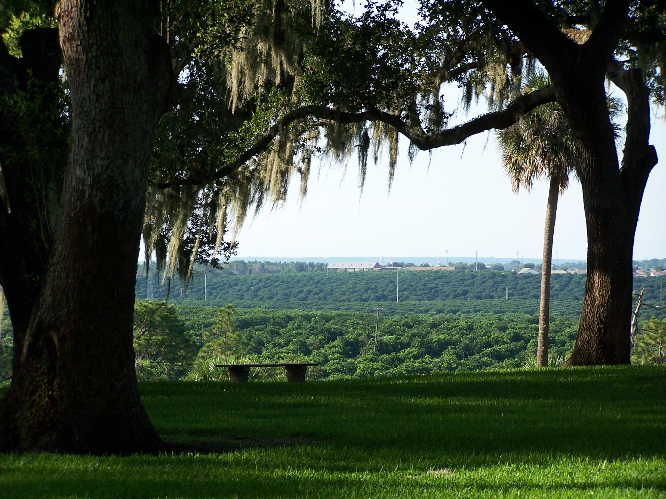 Moss Oak View