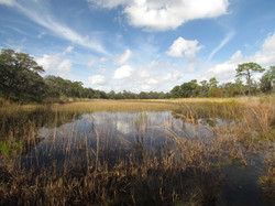 Lake Wales State Forest Marsh