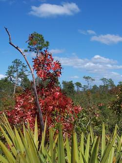 Tiger Creek Preserve