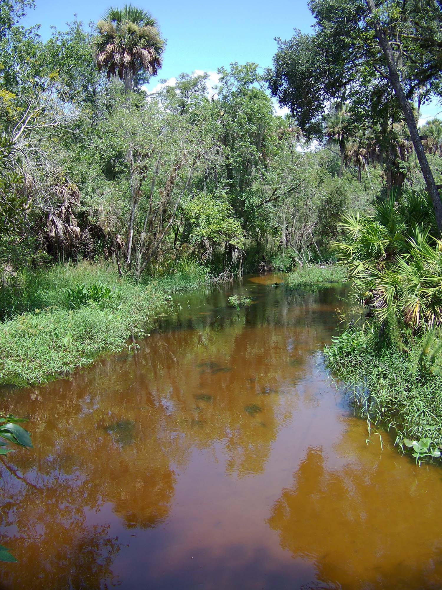 Lake Wales State Forest Reedy Creek