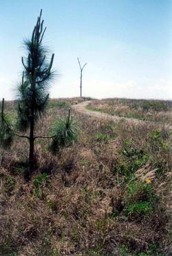 Knoll Hill Trail