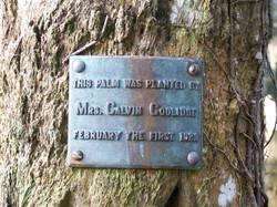 Mrs. Calvin Coolidge Tree