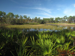 Lake Wales State Forest Pond
