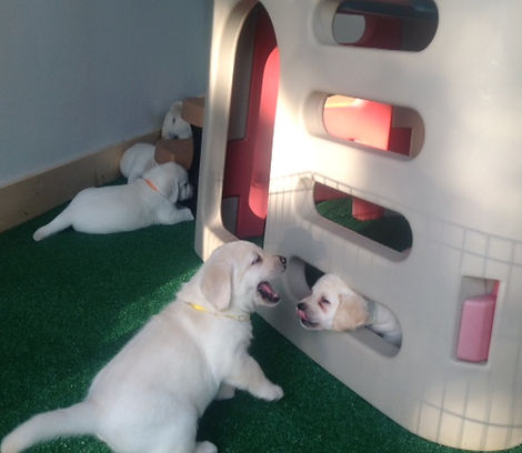Puppies in their playroom