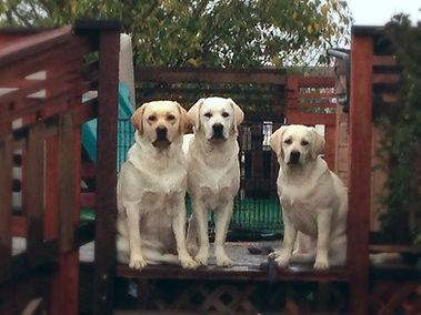 Bailey, Peaty and Darla