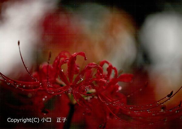 H3010_shin01.jpg