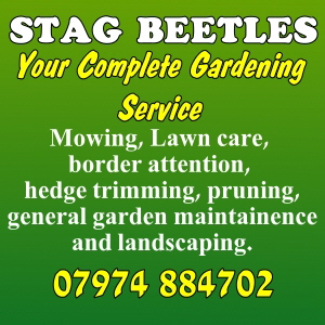 stagbeetle