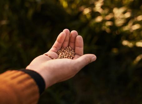 Optimiser ses coûts énergétiques à la ferme : utiliser l'appareil GrainSense au séchoir/silo