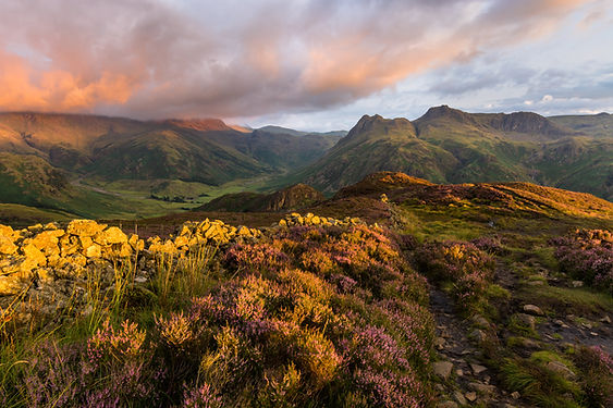 Vibrant morning light illuminating moorland and Langdale Pikes from Limgmoor - guided mountain walking and hill day with Lake District Mountaineering