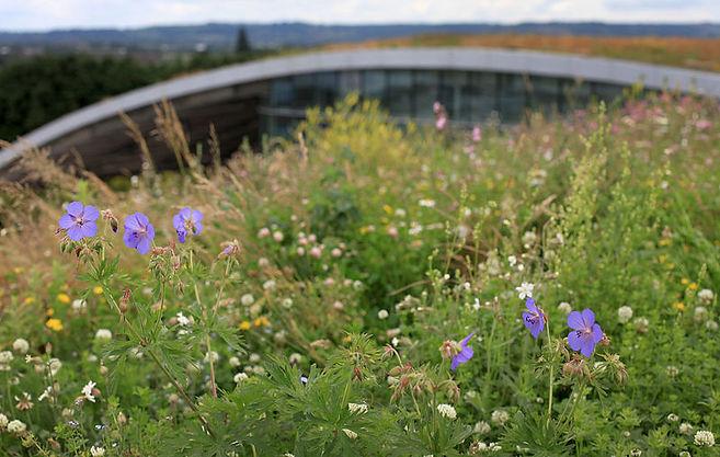 800px-Sky_Garden_Kanes_Foods_Green_Roof.