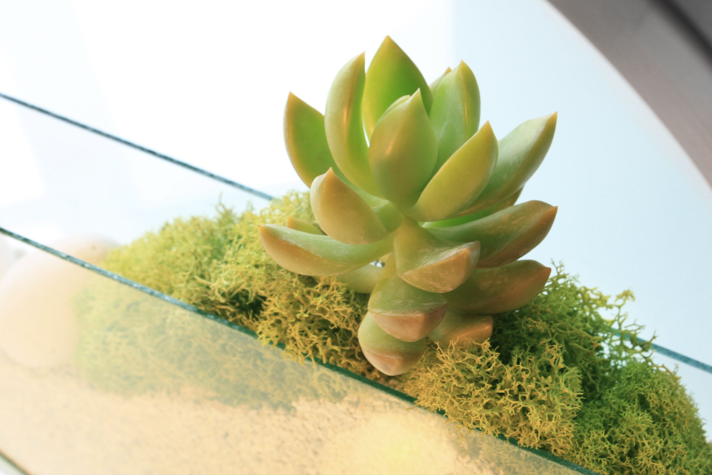 W_TERRARIUM_PLant_close_up