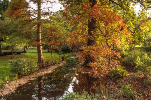 Autumn Woodland Gardens