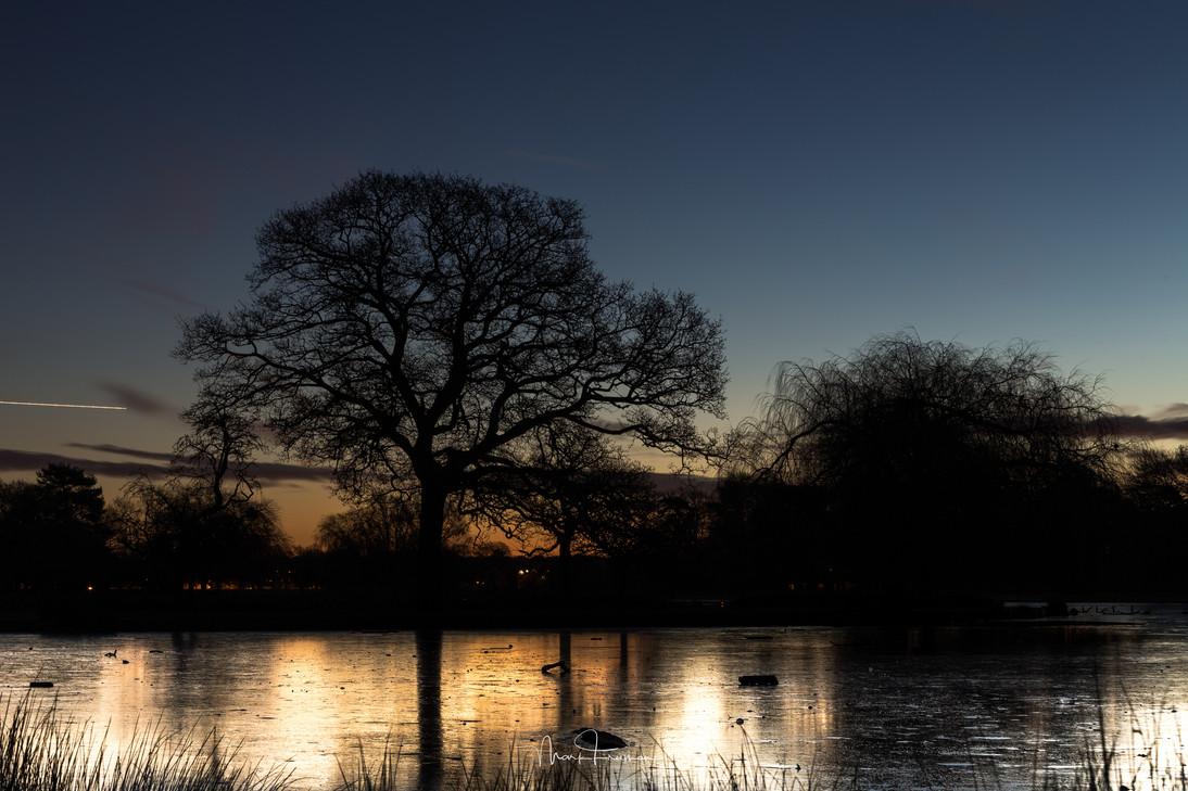 Bushy Park Dawn