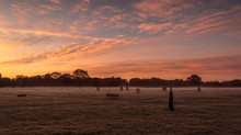 Bushy Park 19th November.