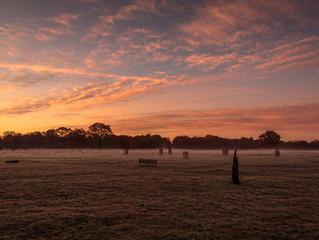 Bushy Park 19th November.