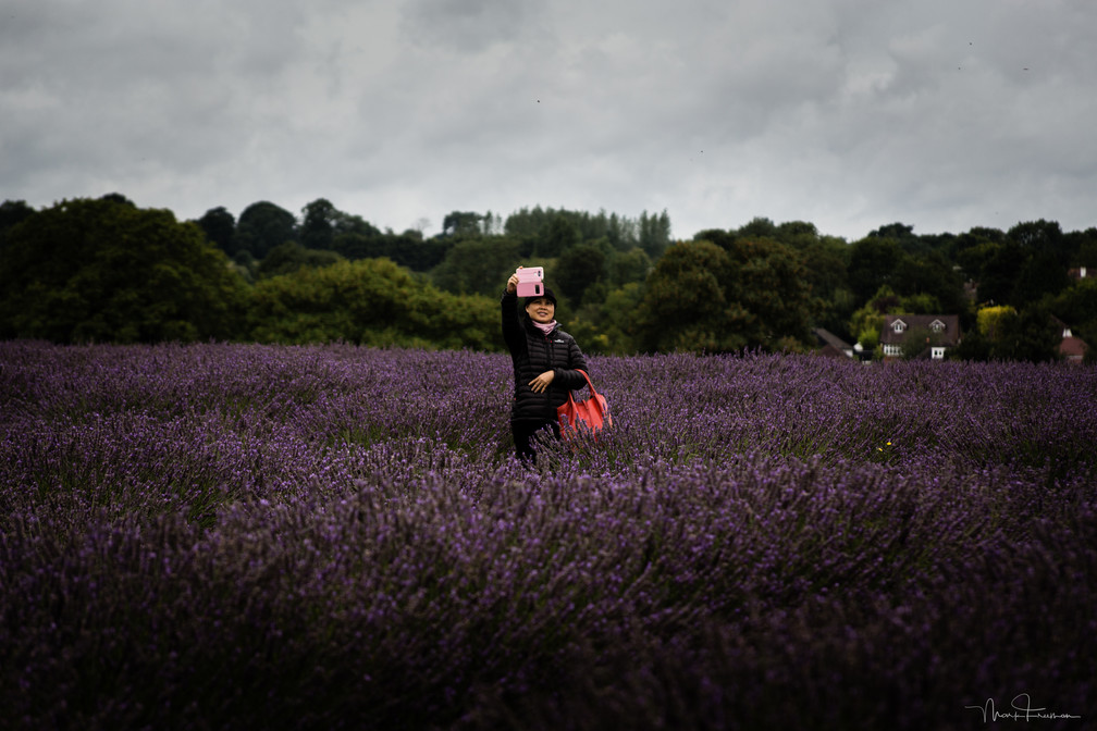 Mayfield Lavender 'Selfie'