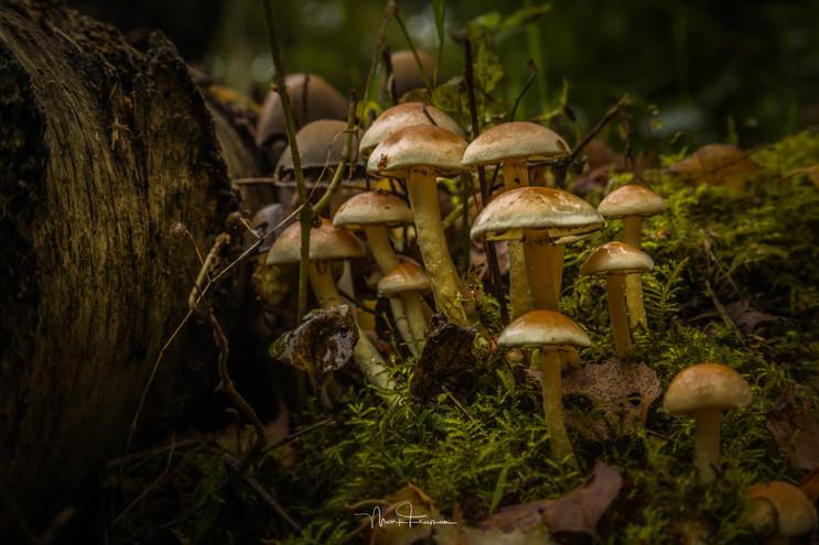 Woodland gardens 'Fungi'