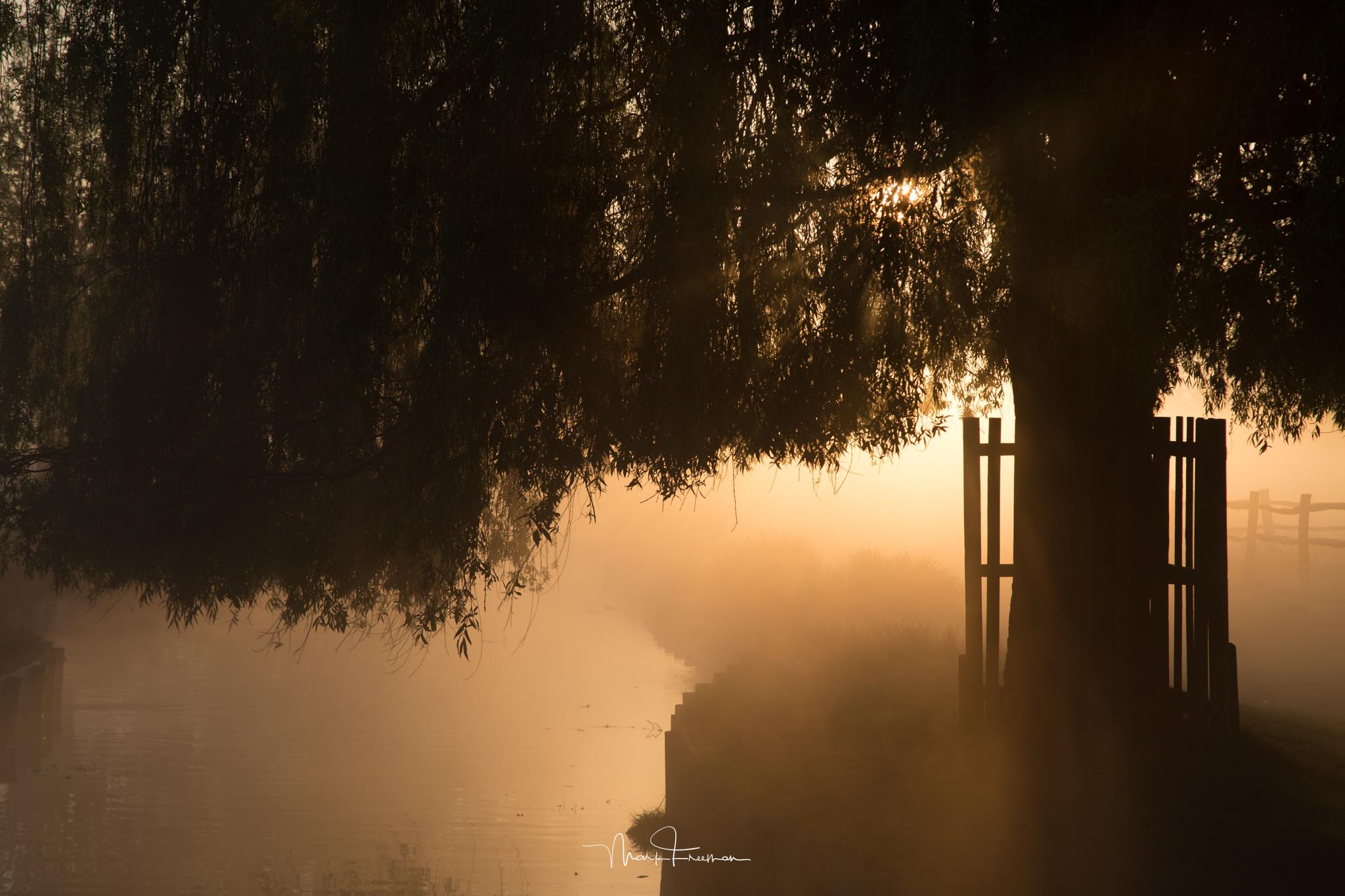 Sunrise in Bushy Park