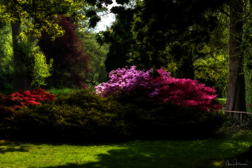 May in the Woodland Gardens