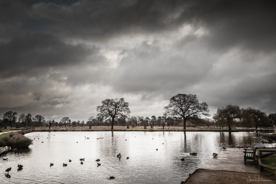 Gloomy morning in Bushy Park