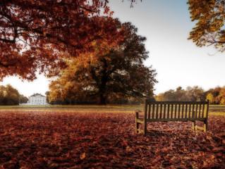 An Autumn photo.