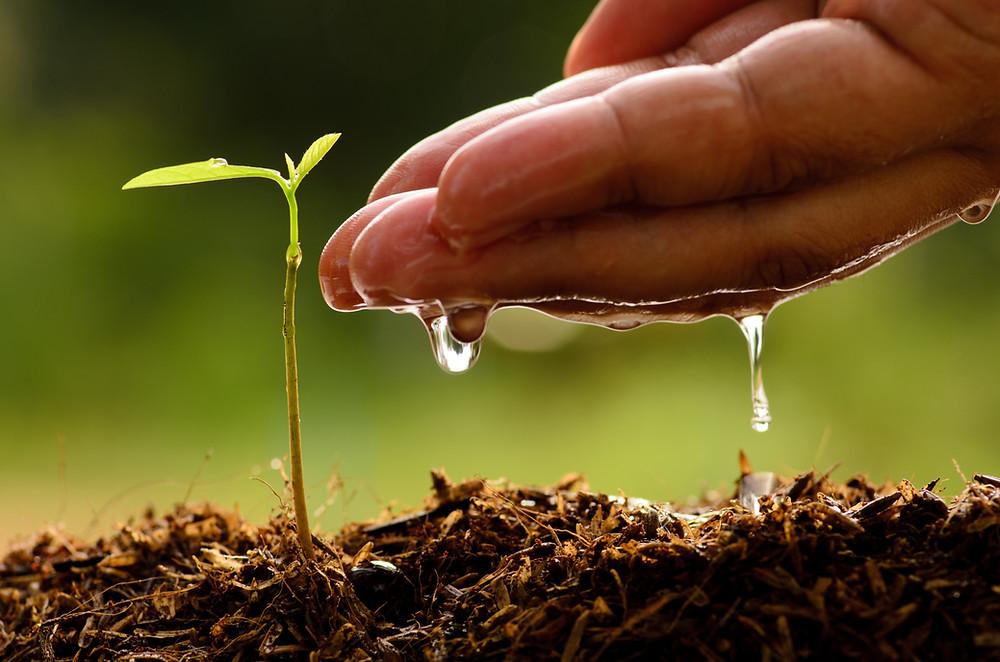 plant een boom, la bazaar du haar, o'right, natuurlijke haarproducten