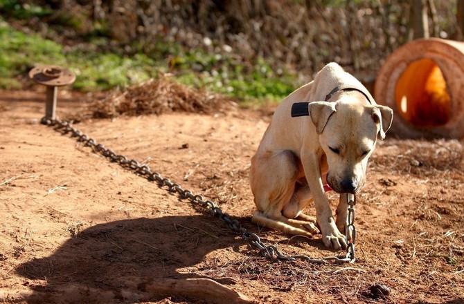Dog Rescue Diary